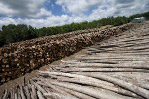 KCLHcedar.logs
