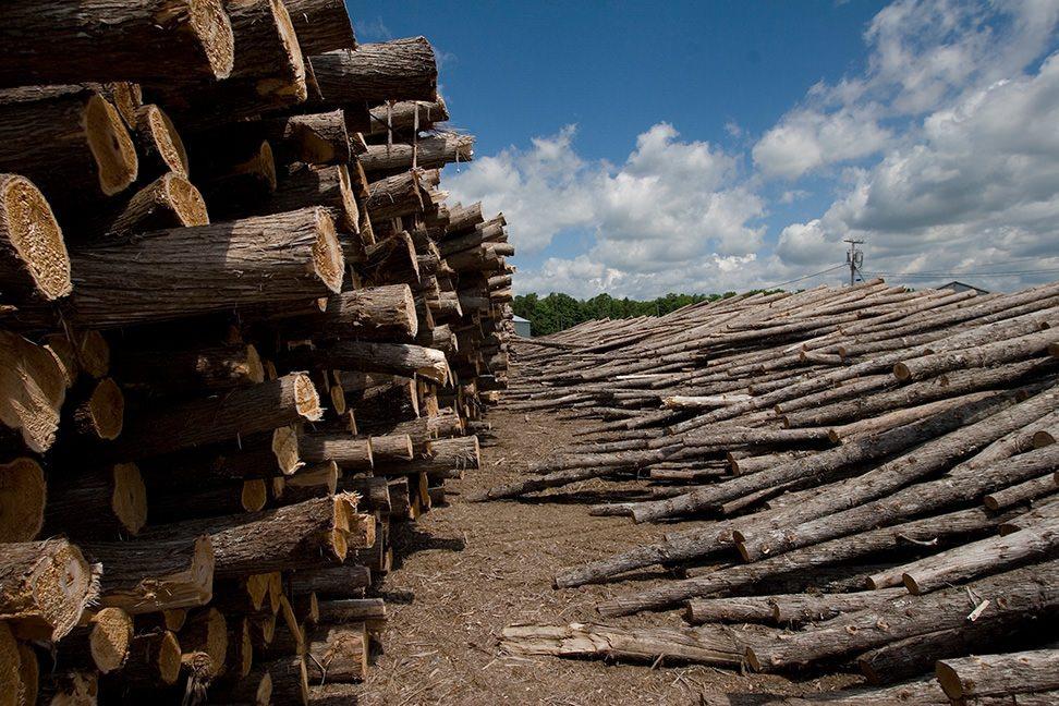 cedar logs from local landowners